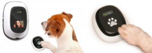 Dog stepping on PawCall button for the PetChatz pet monitor